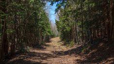 Dark Forest Path by on DeviantArt Forest Wallpaper, Nature Wallpaper, Hd Wallpaper, Wallpapers, Forest Path, Dark Forest, Forest Road, Forest Background, Hd Desktop