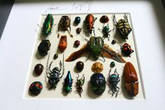 Artframe with real insects : Topquality display with mosaic of insects of the…