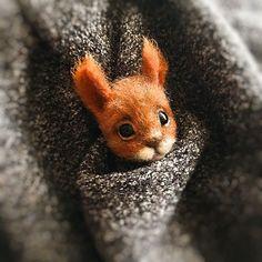 Needle Felting Kits, Needle Felted Animals, Felt Animals, Animals And Pets, Pet Raccoon, Baby Squirrel, Felt Brooch, Cute Little Animals, Felt Toys