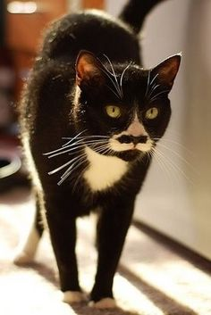 cats with mustaches- two of our favorite things together. awesome.