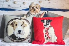 http://melinasouza.com/2015/07/07/6-on-6-julho-2015/  Almofadas- dogs-cachorros-pets - Yorkshire  <3  Spock  Melina Souza - Serendipity <3
