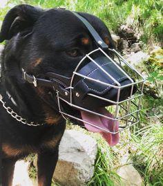 """Mi piace"": 7, commenti: 1 - ROTTWEILER ARLO 134 (@rottweiler_arlo_134) su Instagram: ""#rottweilerarlo134 #😰 #hanniballecter #rottweiler #rottweilers_of_instagram #rottweilerlover…"" Hannibal Lecter, Rottweilers, Horses, Animals, Instagram, Pictures, Animales, Animaux, Rottweiler"