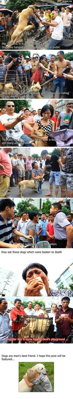 Just happened in China - Dog-Eating Festival this makes me sick to my stomach
