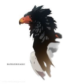 So I've got a bit of a thing for birds also. This is a bateleur eagle -- kind of a weird red-faced eagle from Africa. Animal Sketches, Animal Drawings, Cool Drawings, Wildlife Paintings, Wildlife Art, Creature Concept Art, Creature Design, Eagle Drawing, Digital Art Beginner