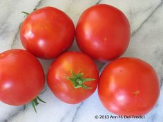 Tomato ~ Early Girl Tomato ~ always good for eating fresh and for making pasta sauce. Photo © 2013 Ann M. Del Tredici