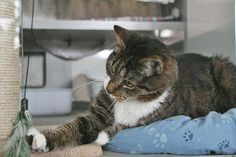Willi ist sehr freundlich und besitzt flauschigstes Fell- Wer möchte ihm ein neues Zuhause geben?  Kooperation von WG-Gesucht.de mit dem Tierheim Berlin.