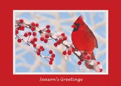 Winter Cardinal Holiday Greeting Card - Discount Greeting Cards