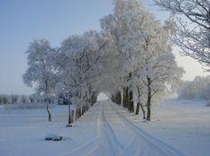 Sne i Nørhalne