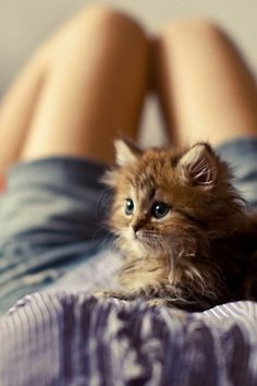 kitty cat girl animals cute hippie hipster boho indie lady kitten bed Legs lovely blue eyes relax woman Gipsy maow