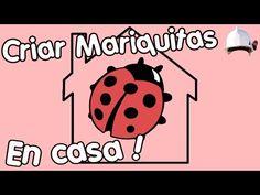 Como criar mariquitas en casa | Fácil y sencillo. - YouTube