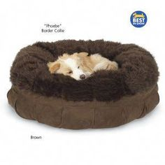 Animals Matter Mod Fur Nest Bed - Dog Beds, Dog Harnesses and Collars, Dog Clothes and Gifts for Dog Lovers Cool Dog Beds, Cute Funny Animals, Dog Harness, Beautiful Dogs, Dog Gifts, Cute Puppies, Fur Babies, Baby Animals, Dog Lovers