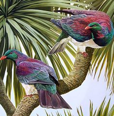 Art by the Sea art gallery specializes in fine NZ arts and crafts, with a huge range of original, fine New Zealand and Maori arts and crafts. Wildlife Paintings, Wildlife Art, Animal Paintings, Nz Art, Art For Art Sake, Art Maori, Doodle Images, Bird Artists, Bird Costume