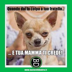 Adoro i piani ben riusciti! #bastardidentro #fratello #cane #ipnoticamentebastardidentro www.bastardidentro.it