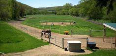 Having a well-designed paddock or sacrifice area -- also commonly referred to as a dry lot or pen -- is one the best things you can do for the overall health and well-being of your horses.