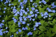 Schattenpflanzen: 10 blühende Arten für lichtarme Gärten Stock Pictures, Stock Photos, Small Gardens, Garden Projects, Garden Ideas, Photo Library, Herbs, Flowers, Plants