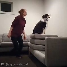Really smart dog Cute Funny Animals, Cute Baby Animals, Funny Cute, Animals And Pets, Funny Dog Videos, Funny Dogs, I Love Dogs, Cute Dogs, Animals Beautiful