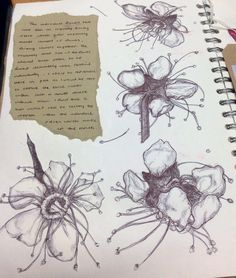 Art Sketchbook with observational drawings of flowers: A-level textiles student work, art & design portfolio
