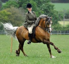 That is a unique color. I've never seen a horse with that coloring! -silver dilution on bay Base coat I think! Most Beautiful Animals, Beautiful Horses, Welsh Pony, Barrel Racing Horses, Bay Horse, Chestnut Horse, All The Pretty Horses, Horse Pictures, Horse Breeds