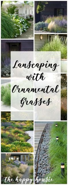 Ornamental grass along to front walk. #lowmaintenancelandscapefrontyard