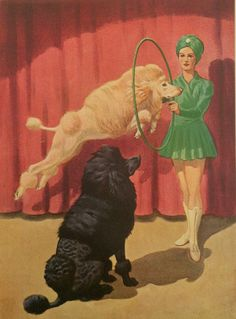 Circus dogs - Vintage Poodle Illustration -