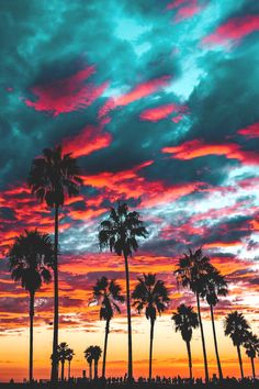 Sunset over Venice Beach, California Beautiful Photos of America Nature Wallpaper, Wallpaper Backgrounds, Tropical Wallpaper, Sunset Wallpaper, Gold Wallpaper, Tree Wallpaper, Beautiful World, Beautiful Places, Wonderful Places