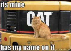 it does say it belongs to a cat