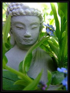 Budda in Forget me not flowers, 5 may 2016 in HollyLand