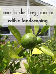 Edible Landscaping: Ornamental Plants You Can Eat via @MomPrepares