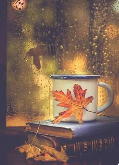 Books, tea and rain drops - Fall pictures nature - Autumn Cozy, Autumn Rain, Autumn Tea, Autumn Coffee, Autumn Morning, Autumn Aesthetic, Autumn Photography, White Photography, Urban Photography