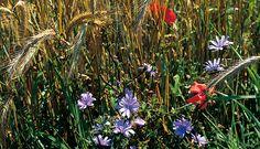 Medicinal plants along the way