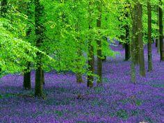 Papel de Parede Grátis para PC - Paisagens de flores: http://wallpapic-br.com/paisagens/paisagens-de-flores/wallpaper-10809