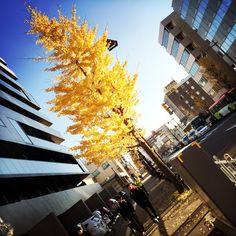 The street in Niigata : www.pajama-days.com #iphotography #art #holidays #asia #street #city #Japan #Niigata #Autumn #Nature