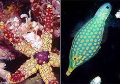 Image result for 海洋生物