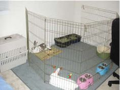 Housing and Supplies | The Georgia House Rabbit Society