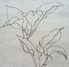 This contour line drawing shows the shape of the plant more so than the shadow and details. It was created by focusing on the outline of the plant.  4- M.Z. & B.K.