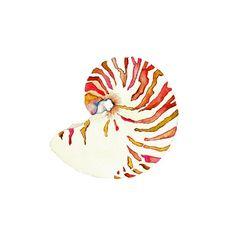 Nautilus Shell.  Coastal Art Print.  Beach House by SnoogsAndWilde, $34.00