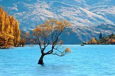 Lake Wanaka, New Zealand by Kah Kit Yoong