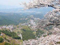 Yoshino, Japão