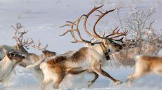 Doe, A Deer, A Female Deer: The Spirit of Mother Christmas