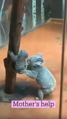 Baby Animals Super Cute, Cute Little Animals, Cute Funny Animals, Cute Animal Videos, Cute Animal Pictures, Cut Animals, Animals And Pets, Beautiful Creatures, Animals Beautiful