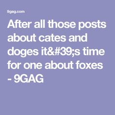 After all those posts about cates and doges it's time for one about foxes - 9GAG