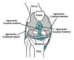 Ligamentos do joelho ossos Vet Med, Medical Art, Body Anatomy, Med Student, School Motivation, Veterinary Medicine, Med School, Biochemistry, Radiology