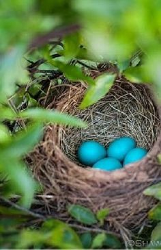 Don't know what kind of bird these eggs came from but they are a beautiful shade of blue.