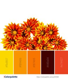 Color Palette Ideas from Flower Orange Flowering Plant Image Orange Flowering Plants, Color Combinations, Color Schemes, Orange Color Palettes, Plant Images, Color Boards, Brand Board, Color Pallets, Color Inspiration
