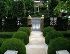 Good garden structure with topiary box, yews & trees
