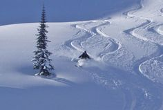 Fresh powder is good for the soul....
