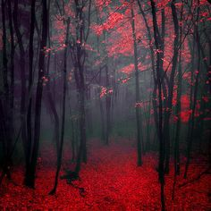 Most popular tags for this image include: red, forest, tree and nature Beautiful World, Beautiful Images, Landscape Photography, Nature Photography, Red Images, All Nature, Belle Photo, Pretty Pictures, Wonders Of The World
