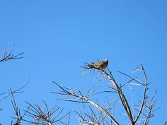 Morning dove. Morning…who who!