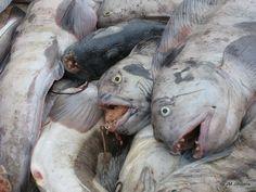 Icelandic fish, RIP (Somewhere,Iceland)
