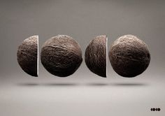 We love this logo design made with coconuts #logo #coconuts #creative